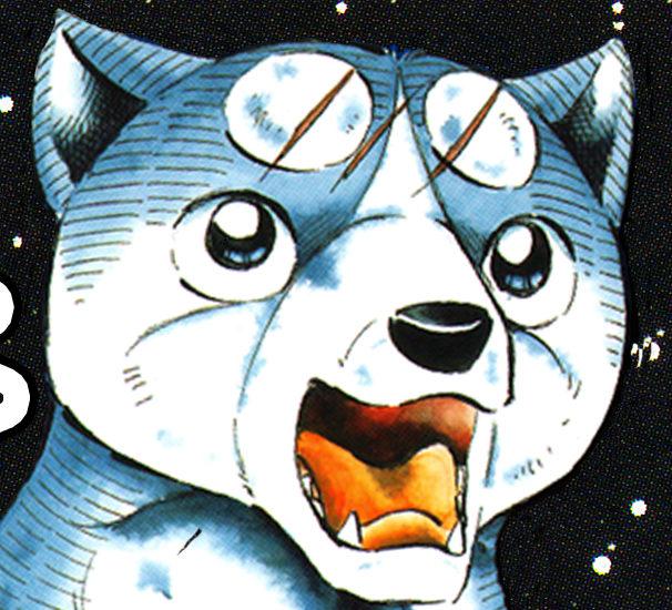 銀(アニメ・銀牙)の犬種は秋田犬でフィンランドで人気?原作は漫画?あらすじは?【どうぶつピース!】